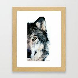 Wolf Art - Timber by Sharon Cummings Framed Art Print