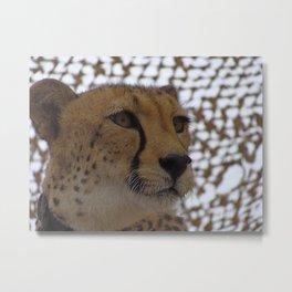 Cheetah Metal Print