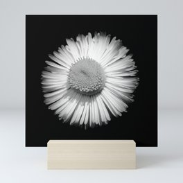 Fleabane B and W Mini Art Print