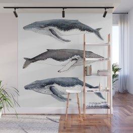 Humpback whales Wall Mural