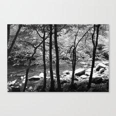 Creek through the Trees Canvas Print