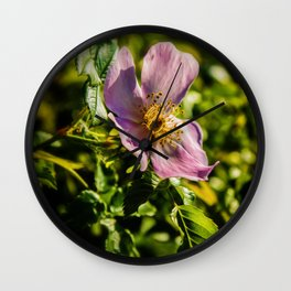 Wild rose Wall Clock