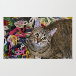 Kitten In Colorful Looms Rug