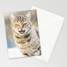 Beautiful cat Stationery Cards