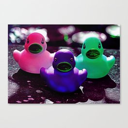 Squeaky duck Canvas Print
