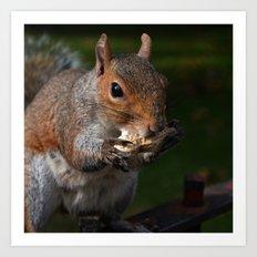 Squirrel's Lunch  Art Print