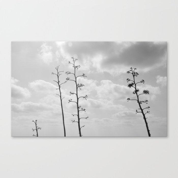 black trees Canvas Print