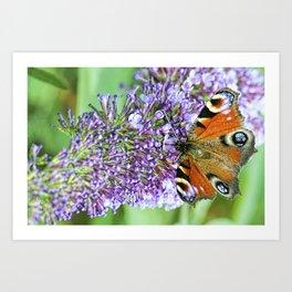Butterfly XI Art Print