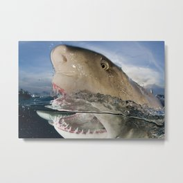 Lemon Shark Snap Metal Print