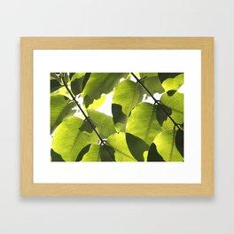 Close Up Leaves Framed Art Print