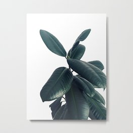 Ficus Elastica #16 #White #decor #art #society6 Metal Print