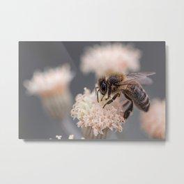 Macro Bee Picture Metal Print