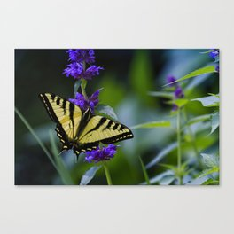 Butterfly on a Purple Flower Canvas Print