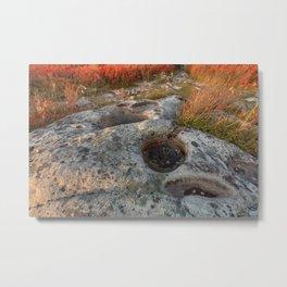 Autumn Huckleberry Fossil Metal Print