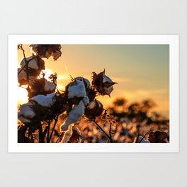 Cotton Field 12 Art Print