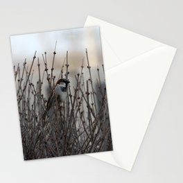 Chickadee in a Bush Stationery Cards