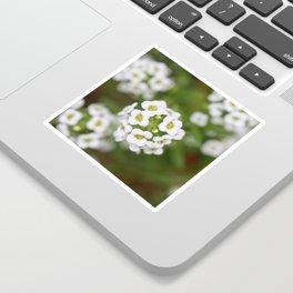 Sweet Alyssum Sticker