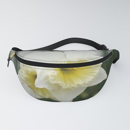 White and yellow daffodils, early spring flowers Fanny Pack