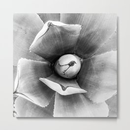 Cactus Succulent // Black and White Close up Desert Plant High Quality Photograph Metal Print