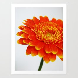 Orange Burst Art Print