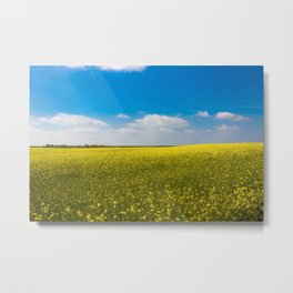 Drifting Days - Blissful Spring Day of Blue Skies and Yellow Canola Fields Metal Print