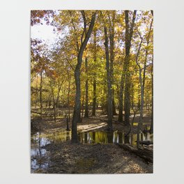 Autumn Forest with Water Puddles Poster