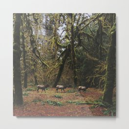 Rainforest Elk Metal Print
