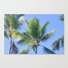 palm. Canvas Print