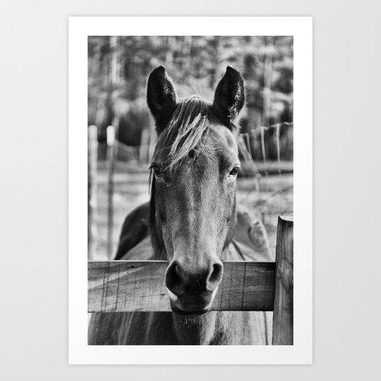 Waiting (Black and White Horse #1)  Art Print