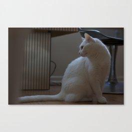 cat look Canvas Print