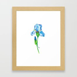 Iris flower Framed Art Print