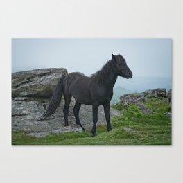 Dartmoor Heritage Pony Canvas Print