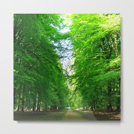 Green Forest Path Metal Print