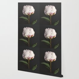 Peony - simply perfect Wallpaper