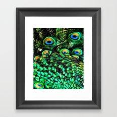 Oiled Peacock Framed Art Print