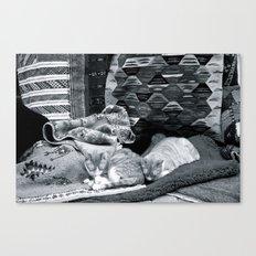 Marrakesh Cats IV Canvas Print