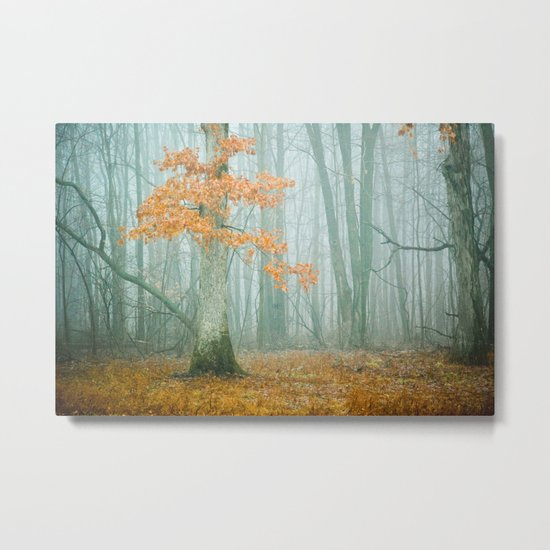 Autumn Woods Metal Print