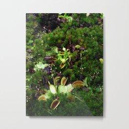 Venus flytrap Metal Print
