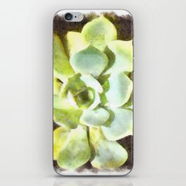 Succulent Garden Plant With Dew iPhone Skin