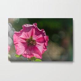 Beautiful Pink Flower Metal Print