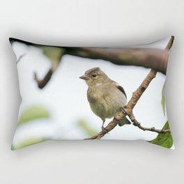 Young Chaffinch Songbird Bird Perching on a Branch - Wales, UK Rectangular Pillow