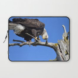 Alaskan Bald Eagle - Quizzical Laptop Sleeve