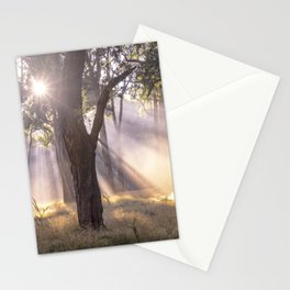 Afternoon Delight, Otways National Park - Australia Stationery Cards