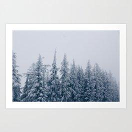 BV Trees Art Print