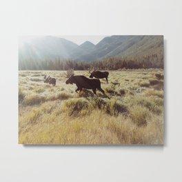 Three Meadow Moose Metal Print