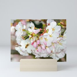 Cherry Blossoms & Bee Mini Art Print
