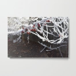 Frost Spiked Crabapple Tree Metal Print