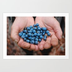 Blueberry Bogs Forever Art Print