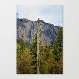 Tree In Yosemite Canvas Print