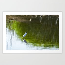 White Egret standing over reflection in green water Art Print
